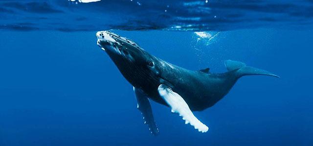 Excursion observation des baleines – Rivière du Loup