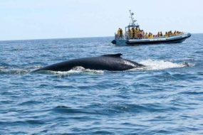 Excursion pour voir les baleines